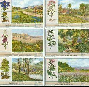 LIEBIG : S_1451 : Plantes médicinales