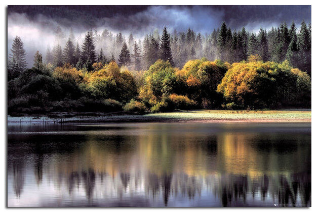Forest Autumn Colours Large Wall Poster New - Laminated Available