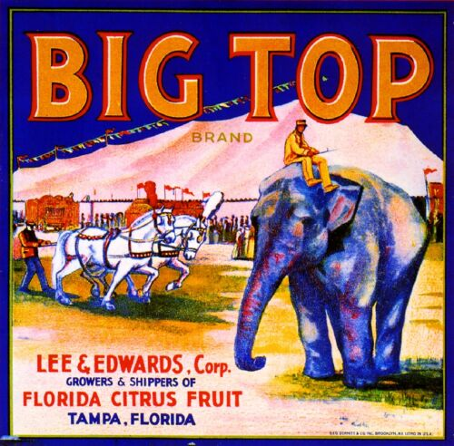 Tampa Florida Big Top Circus Elephant Orange Citrus Fruit Crate Label Art Print