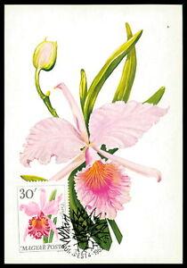 La Hongrie Mk 1965 Flore Orchidées Orchids Maximum Carte Maximum Card Mc Cm Cx20-afficher Le Titre D'origine Vif Et Grand Dans Le Style