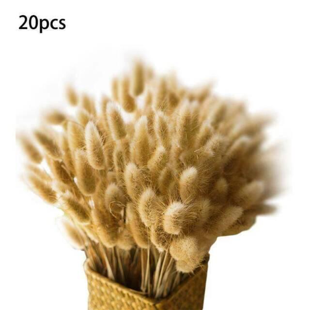 20PCS Natural Dried Pampas Grass Reed Flower Bunch Wedding Bouquet Decors
