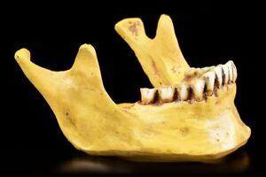 Human-Lower-Jaw-Decorative-Figure-Skull-Bones-Gothic