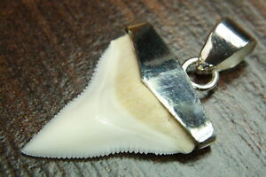 Silber AnhÄnger Silber prionace Glauca Intellektuell Shark Hai Zahn Fossiler Haifischzahn