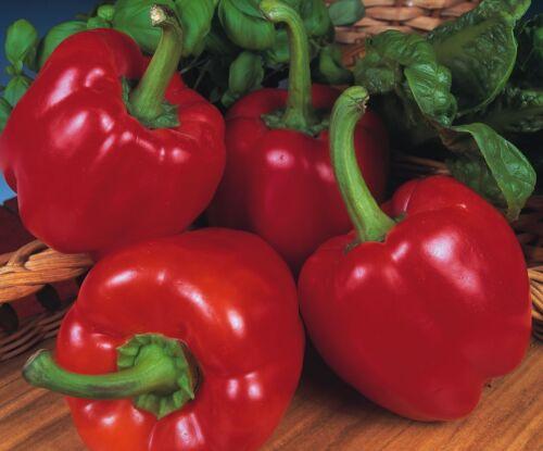 Légumes-Grosses graines-paquet illustré-poivre-Beauté Bell F1