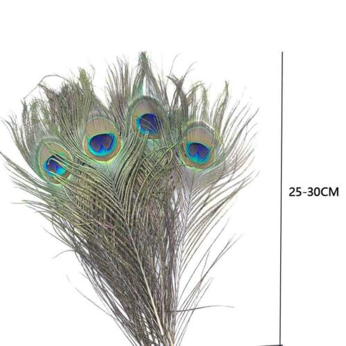 10pcs Natural Peacock Tail Eye Hair Feather Fly fishing Tying Streamer/_Flies PRO