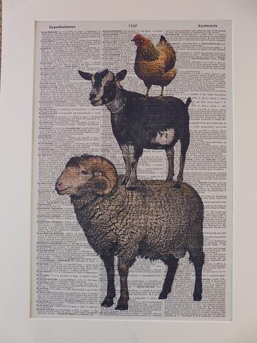 sheep goat Farm Animal Print No.547 chicken
