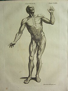 1797 GEORGIAN PRINT ~ DRAWING MALE BODY FRONT VIEW MUSCLES ANATOMY ...