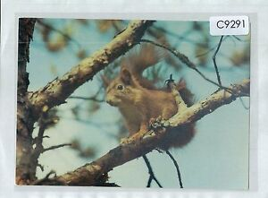 C9291cgt-Animals-Squirrell-Wiewoirka-postcard