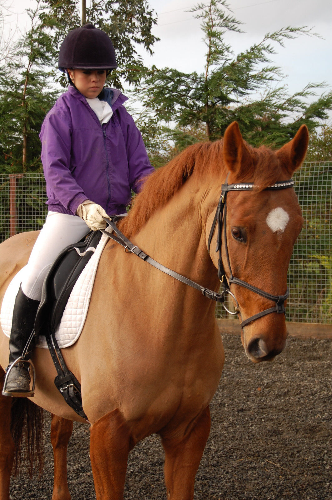 De Boiz Correct Contact Reins - Training Reins for Horse Rider. and Rider. Horse  Made in UK 494362