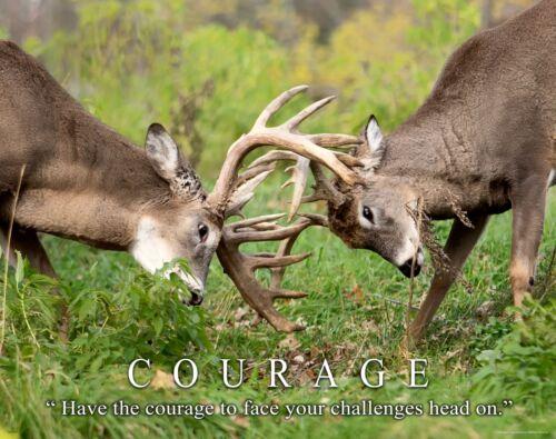 Whitetail Deer Art Print Motivational Poster Cabin Decor Bow Hunting Gift MVP519