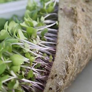 Biostrate Felt 10 Quot X20 Quot Growing Mat Hydroponic Microgreen