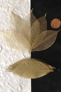 25-Skeleton-Leaves-Gold-Metallic-see-through-leaf-Wedding-Christmas-Anniversary