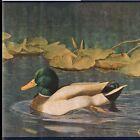Mallard Duck in Golden Marsh - Gold Sage Green - ONLY $6 - Wallpaper Border A211