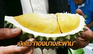 2019 NEW 1 CUTTING 3 inch SUGARCANE SWEET reduce toxic  rare Thailand