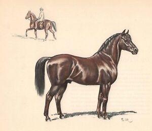 The Morgan Saddle Horse Color Print Edwin Megargee Vintage Book ...