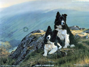 Steven-Townsend-END-OF-A-WORKING-DAY-Border-Collies