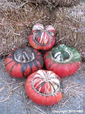 10 American TURKS TURBAN SQUASH GOURD Cucurbita Seeds