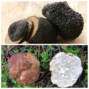 Seeds-Mushroom-Truffle-Black-White-Dried-Mycelium-Spawn-Spores-Substrate
