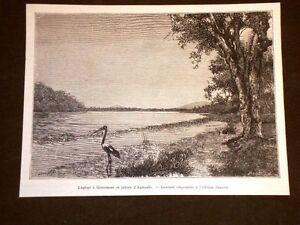 Lagune-a-Gracenere-et-jabiru-d-039-Australie-en-1889