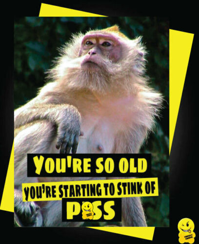 Funny Birthday Card Animals Banter Cheeky Humour Monkey Stink of p*ss C344