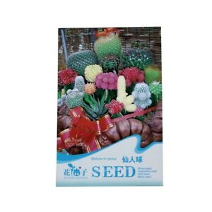 Planta 1 Bolsa de 10 Semillas de mezcla de flor de cactus Y3A6