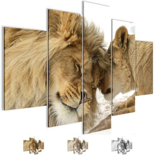Peintures murales images XXL Lion amour nappes Toile Image Art pression 002153