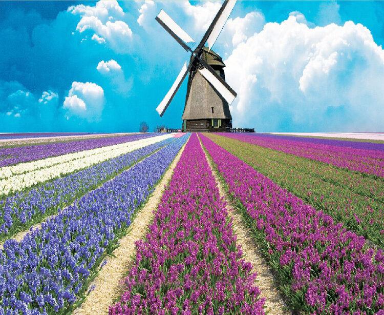 3D Windmill Flower 4252 Paper Wall Print Decal Wall Wall Mural AJ WALLPAPER GB