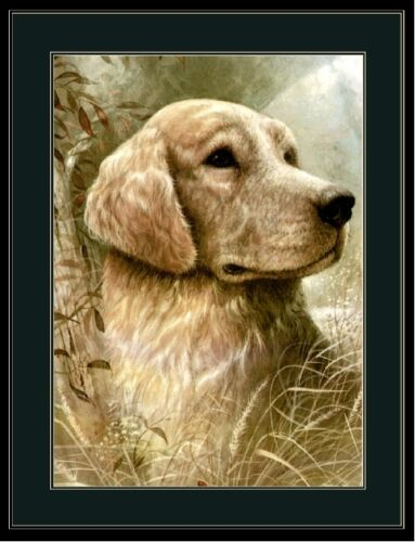 English Picture Print Golden Retriever Dog puppy dogs puppies Head Art poster