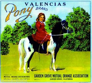 Garden Grove Pony Horse Young Girl Orange Citrus Fruit Crate Box Label Art Print