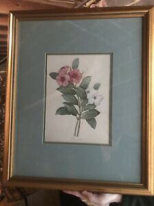 "Painting Art Antique Vintage P.J. Redoute botanical etching floral art print 20"""