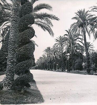 Espagne C. 1950 - Le Parc Genoves Cadix - Div 10284 Opruimingsprijs