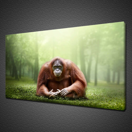 ORANGUTAN CANVAS PICTURE PRINT WALL ART HOME DECOR WILD LIFE LANDSCAPE