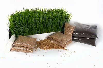 Wheatgrass Organic KIT DIY for SALE 4XSEED Pack + 4Trays R250.00