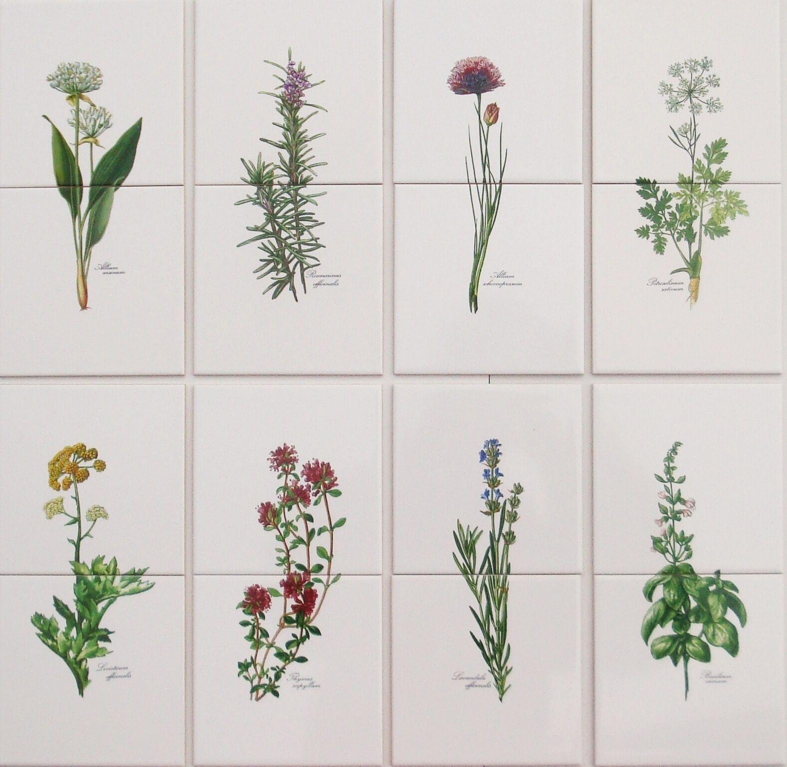15x15 Küchenfliesen mit Kräutermotiven Basilikum Schnittlauch Rosmarin Thymian