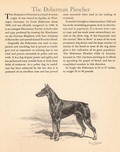 1942-Antique-DOBERMAN-Dog-Art-Print-Edwin-Megargee-Doberman-Pinscher-Print-3829f