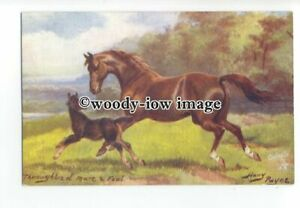 an0942-Thoroughbred-Mare-Foal-No-9138-Artist-N-Drummond-Postcard-Tuck-039-s