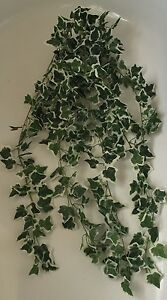 Artificial Greenery  Top Quality Trailing Ivy Variegated Reptiles Vivariums - Leicester, Leicestershire, United Kingdom - Artificial Greenery  Top Quality Trailing Ivy Variegated Reptiles Vivariums - Leicester, Leicestershire, United Kingdom