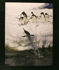 Photographic-art-Print-seals-playing