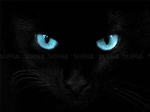 Chat,noir,yeux,bleu,Panther,photo,Art,Imprime,