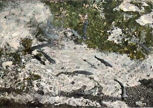 Carte-postale-10cmX15cm-COTE-D-039-OR-LAIGNES-les-truites-de-la-Laignes