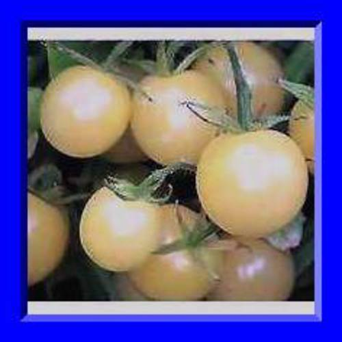 S//H See our store! Comb Super Snow White Cherry Tomato Seeds