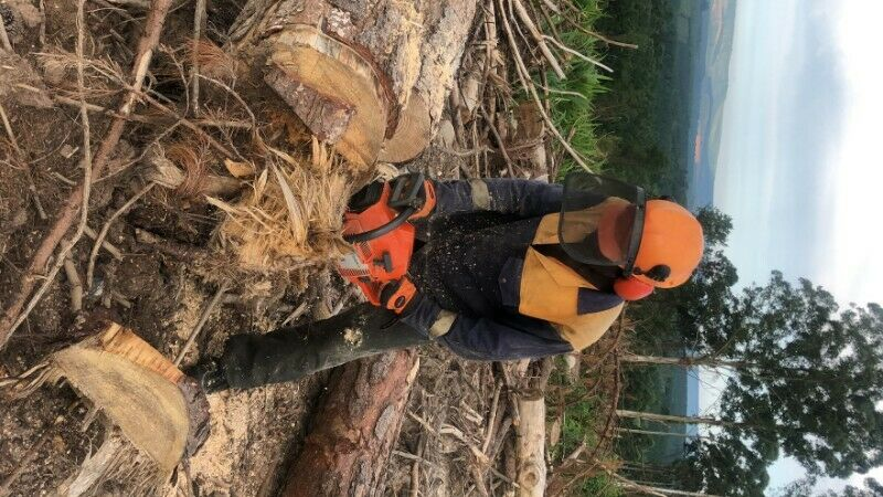 Nelspruit Tree cutting and Felling