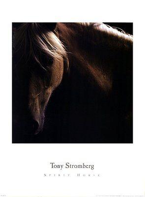 Spirit Horse by Tony Stromberg Mane Western Ranch Poster 26x19 HORSE ART PRINT