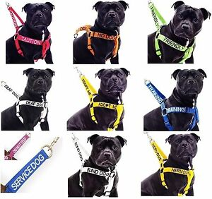 Strong-As-Leather-Staffy-Staff-Staffie-Dogs-Harness-Lead-Leash-Collar-Or-Sets