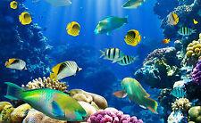 Framed Print - Colourful Tropical Fish Aquarium (Picture Angelfish Guppy Art)