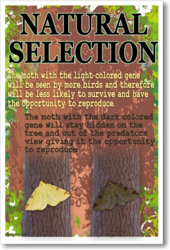Natural Selection NEW Classroom Biology Science Poster