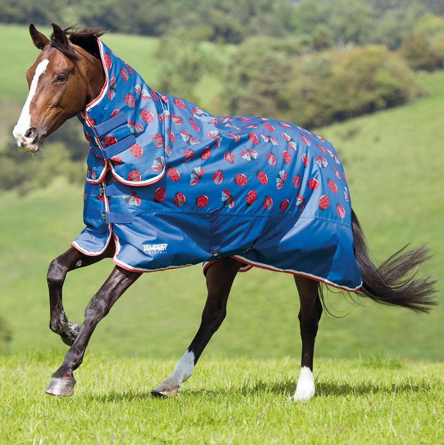 Shires Tempest 200G Combo Affluenza Alle Urne, Coccinelle stampa 6FT 6 Nuovo con etichette
