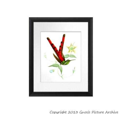 Vintage Hummingbird Print no.10 Unframed Bird Wall Art gift for mom