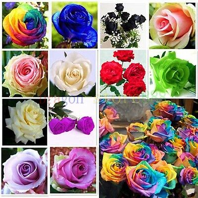 100 Color rare Rose Seed Colorful Seeds For Your Lover Petal Plants Home Garden