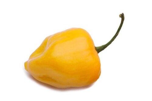 Yellow Habanero x 10 Chilli Seeds